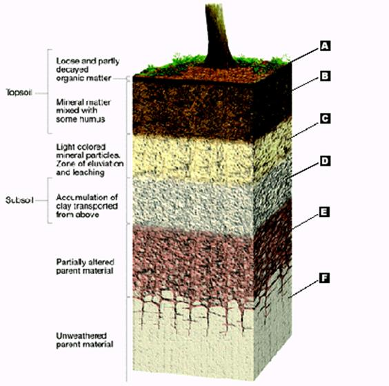 Image gallery o horizon for Physical properties of soil wikipedia